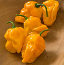 Suave Orange Pepper