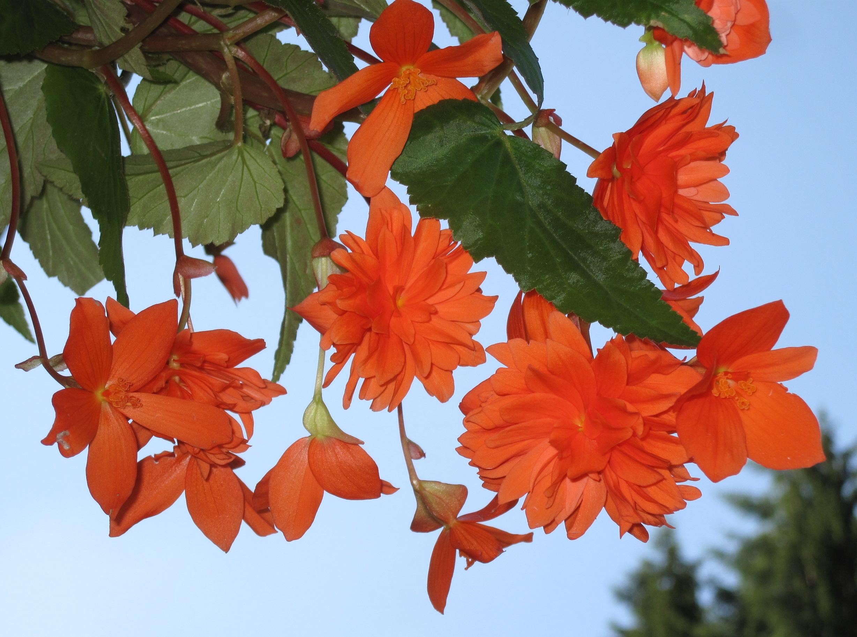 Low Maintenance Annuals For Shade Echters Garden Talk